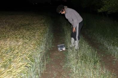 Nakon uočavanja češnjarke uzimaju se koordinate, mjeri se vlažnost, temperatura i druge ekološke karakteristike